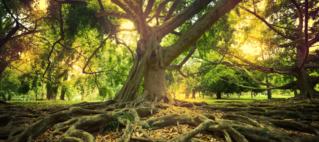 Yogawoche Rigi -Back to the Roots